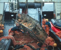 2000 NMFS Trawl Survey